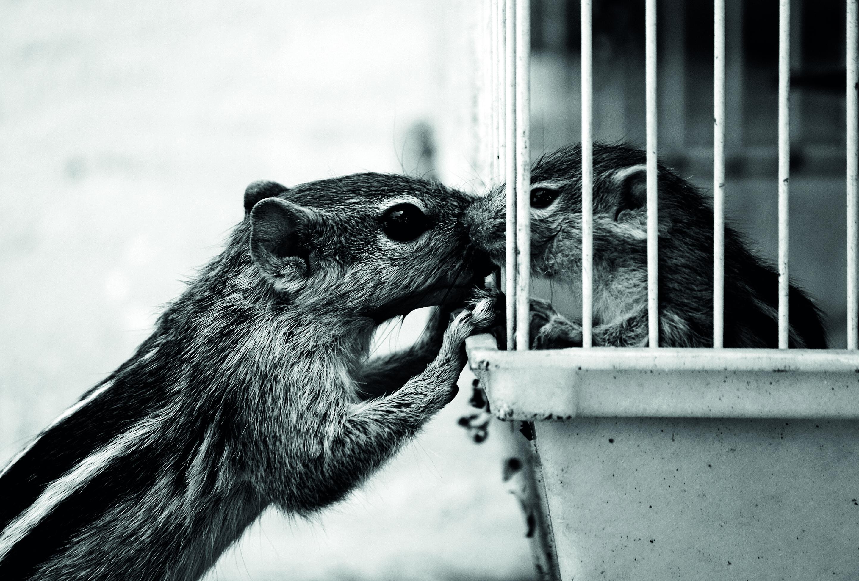 squirrelBUENA
